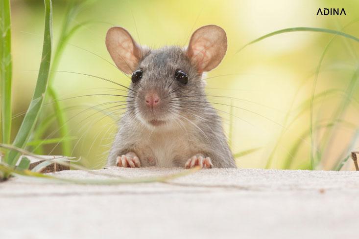 Đặt tên công ty với người tuổi Tý (Chuột)